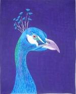 ZE 320 Peacock Portrait
